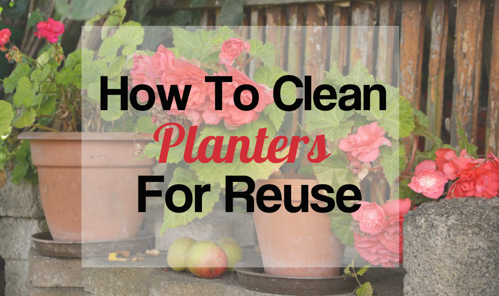 How to Clean Planters For Reuse