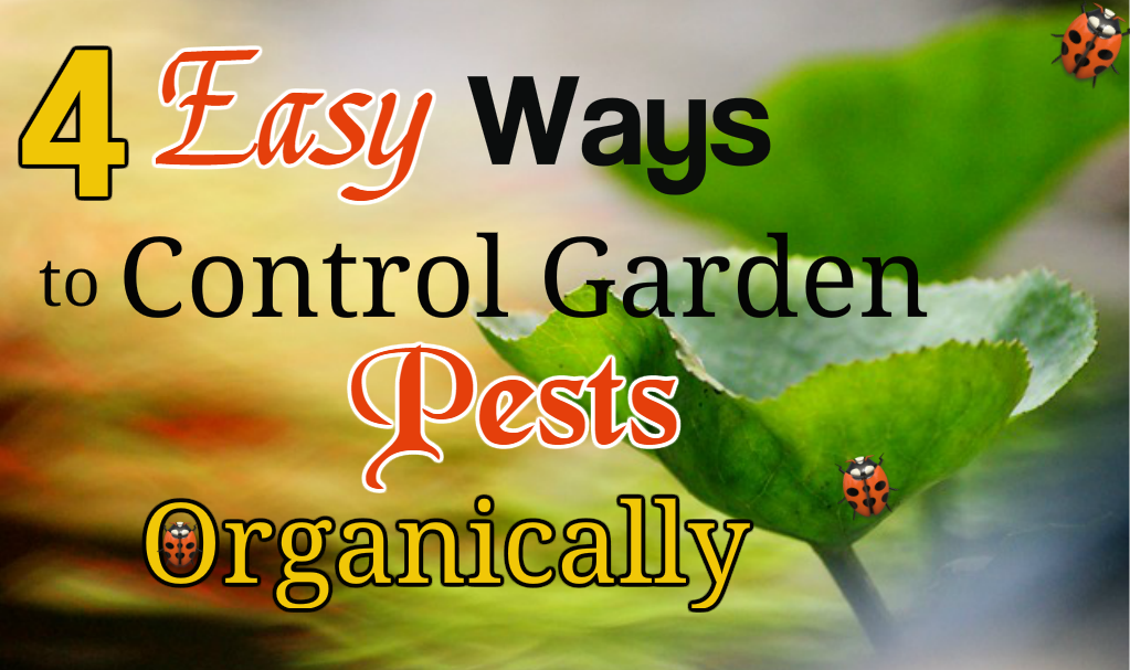 4 Easy Ways to Control Garden Pests Organically